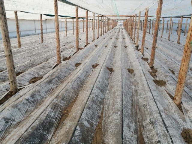 cartofi brute împotriva varicozei preparate pentru tratamentul varicelor interne
