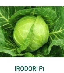 Irodori F1
