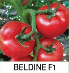 Beldine F1