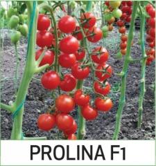 Prolina F1