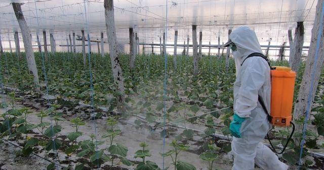 Fertilizarea foliara