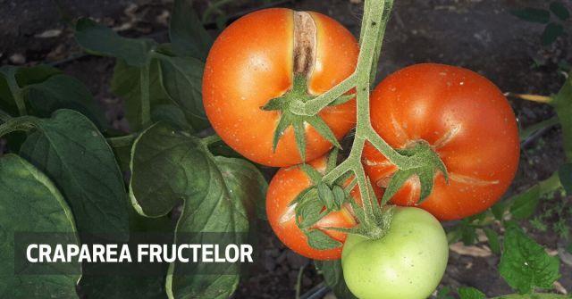 Fertilizarea foliara craparea fructelor