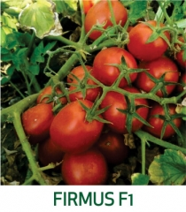 Tomate Firmus F1 Marcoser