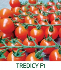 Tomate Tredicy F1 Marcoser