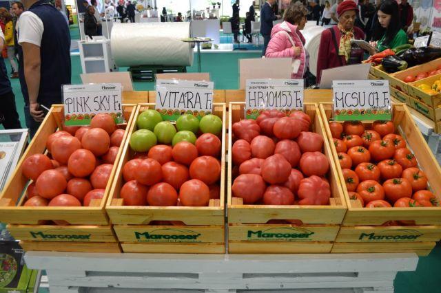 Hibrizi de tomate roz expusi la standul Marcoser