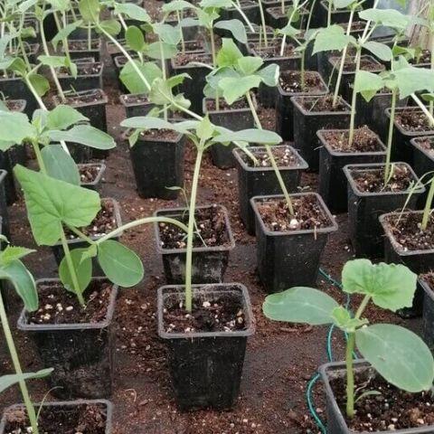 Cum puteți proteja plantele împotriva dăunătorilor într-un mod natural.