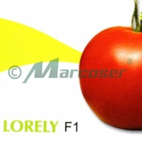 LORELY F1